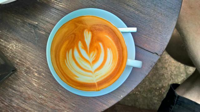 fern forest cafe 4
