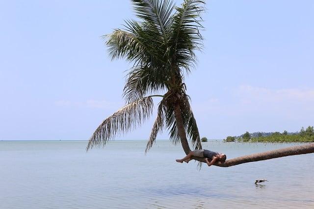 palme phangan